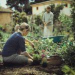 Zakładanie rabat kwiatowych - kilka praktycznych porad